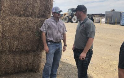 Audit Feed Additives to Control Feed Costs