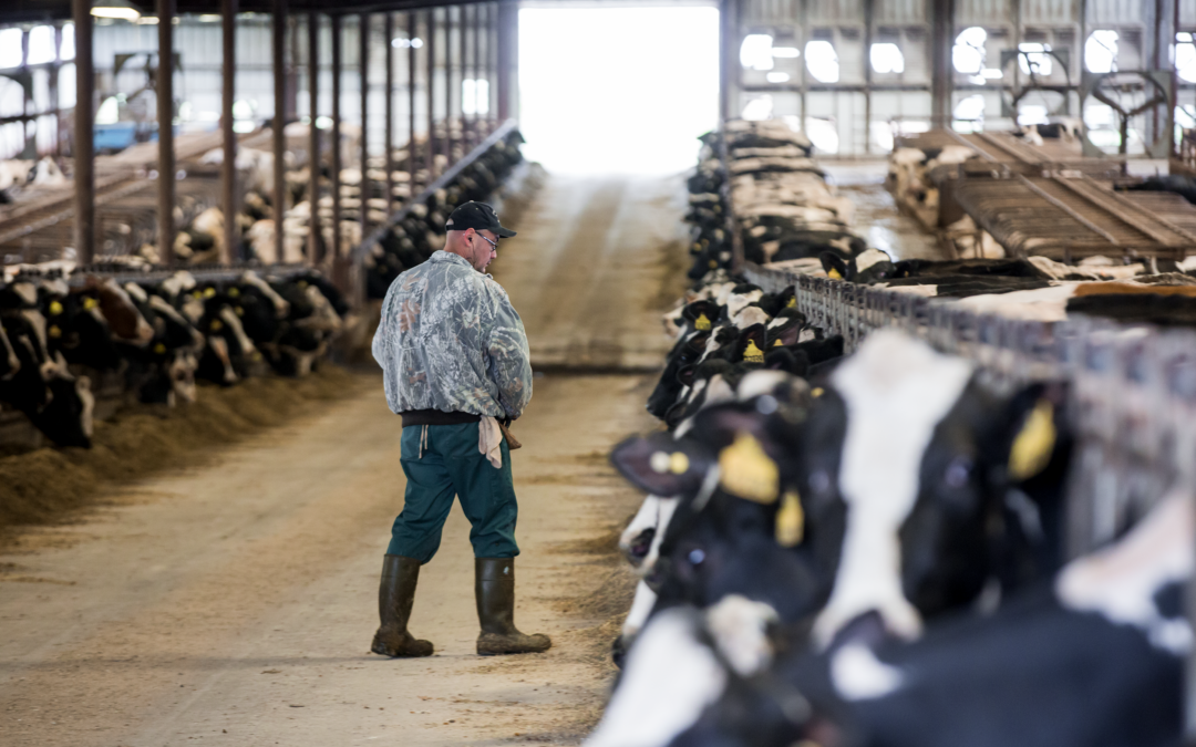 The Interconnected Dairy: Decisions Have Downstream Consequences
